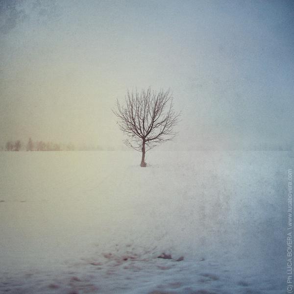 Progetto Snow Alone di Luca Bovera