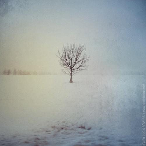 Snow Alone
